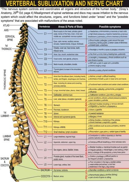Vertebral_Subluxation_Nerve_Chart